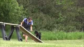 Toby (poodle) Puppy Camp Training Video