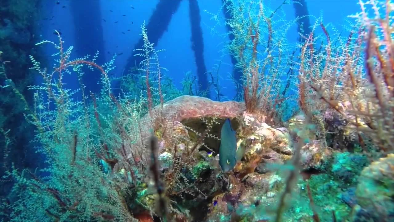 2015 Diving Oil Rigs In The Texas Flower Garden Banks National Marine  Sanctuary   YouTube