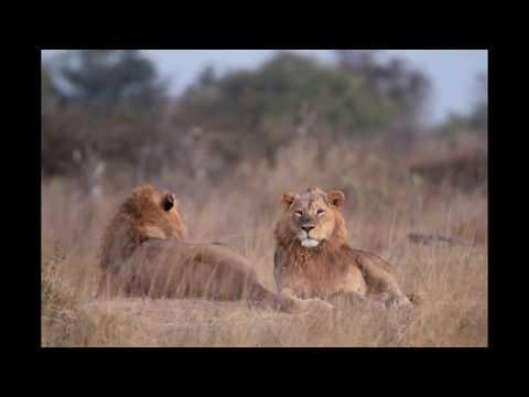 Moremi National Park Botswana 2017