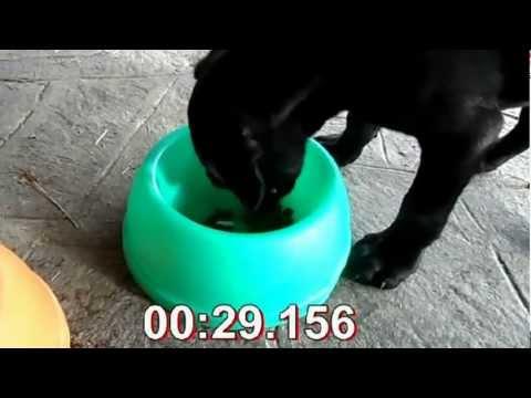 cane-corso-2-mesi---lapo