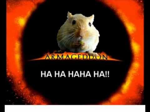D p che de l 39 afp 39 39 hamster 39 39 doovi - Hamster russe panda ...