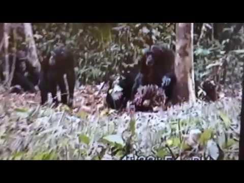 Digitising Hi8 at Primate Research Institute