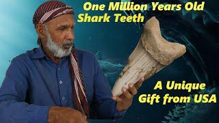 1,000,000 Years Old Shark Teeth Gift!!!