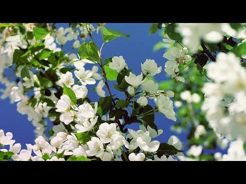 Весна Апрель