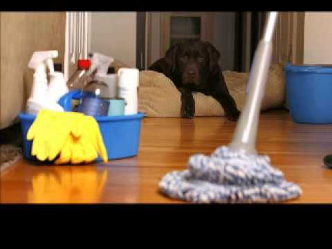 Bond Cleaning Gold Coast Company Expertise Cleaning