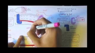 DNA Replication HD animation