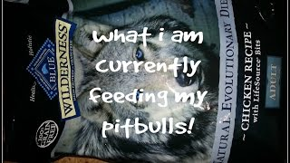 How To Feed A Pitbull -what I Feed My Allergy Prone Pitbulls April 2015