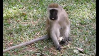 Kenia - Zwierzęta