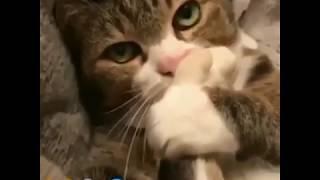 🐱 Котик говорит по рации - немного юмора 😂 (415 вызывает базу)