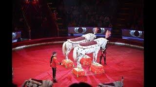 """Шоу Королевского цирка Гии Эрадзе """"Бурлеск"""" (Цирк на Цветном, видеонарезка)"""