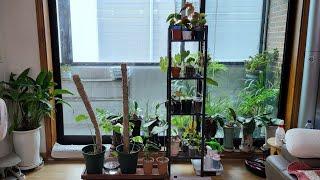 식물 월동준비 (식집사들 최애 이케아 선반 구매 후기)