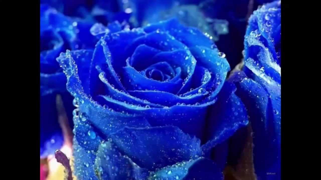 Top 10 flores mas bonitas del mundo top ikerwater youtube - Fotos de flores bonitas ...