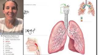 Respiratory system 3- Larynx