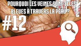Pourquoi les veines sont-elles bleues à travers la peau ? #12