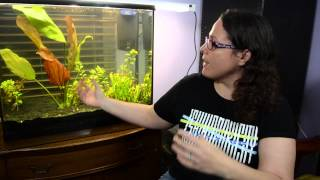 Introduction to angelfish tank