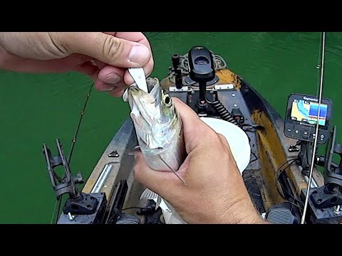 The Hail Mary Trip | Catfish And Skipjack Fishing Action