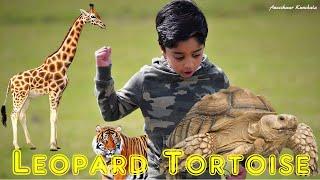 Animal Science for Kids | Leopard Tortoise | Aneeshwar Kunchala |