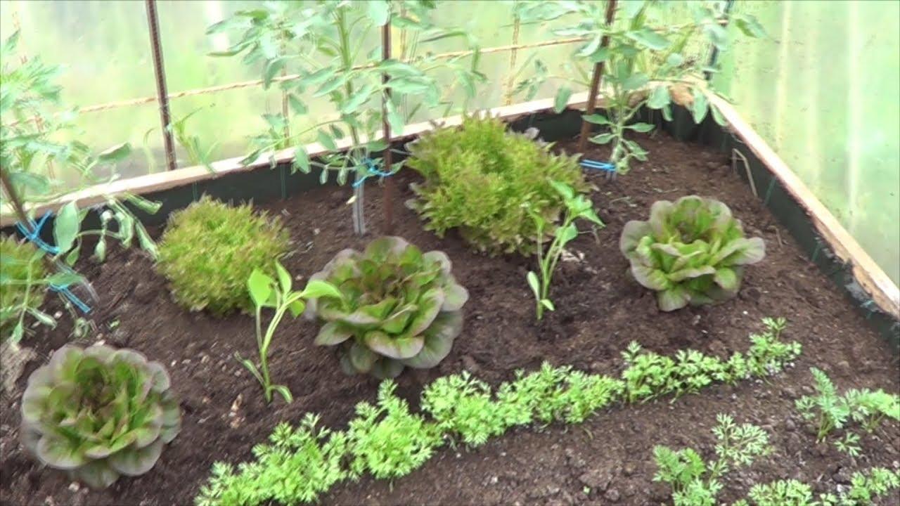 Que Cultivar En El Invernadero En Invierno La Huertina De Toni Youtube