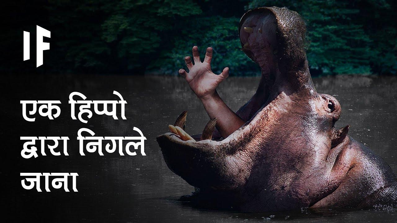 क्या हो अगर एक दरियाई घोड़ा आपको निगल ले   What If You Were Swallowed by a Hippo?