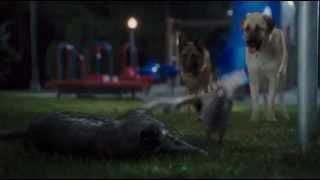 """Кусок из фильма """"Кошки против собак 2"""""""