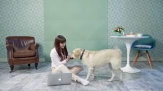 """Реклама онлайн гипермаркета """"Мир Корма"""""""