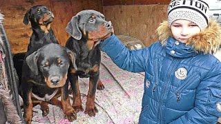 ДЕТИ и  РОТВЕЙЛЕРЫ. Kids playing with puppies Rottweiler. Одесса.