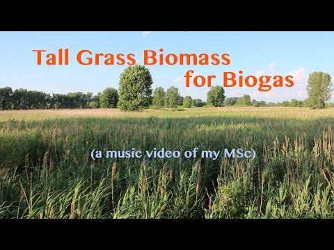Tall Grass Biomass for Biogas (Music Video of my MSc)