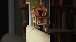 층간소음 유발하는 고양이