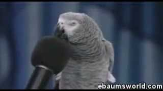 Papuga, która naśladuje inne zwierzęta