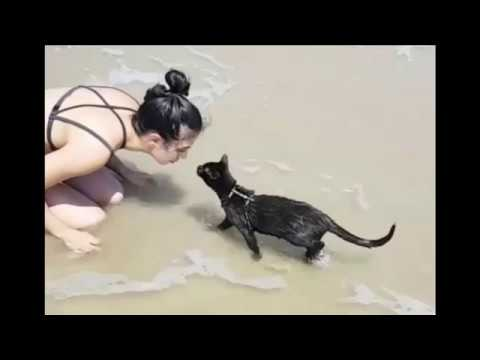 Cat loves swimming in the ocean and frolics like a dog in the waves at the beach