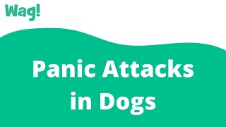 Panic Attacks in Dogs | Wag!