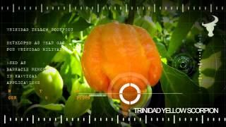 Trinidad Yellow Scorpion Pepper :: Deadwood 7 Sauce