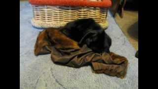 Кот и капюшон