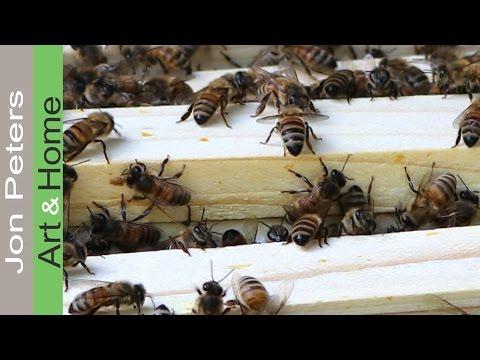 Beekeeping, Bee Keeper Update 6 12 2016 Adding Honey Supers