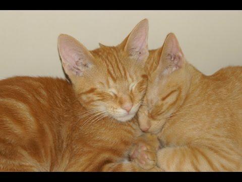 Our New Kittens | Kai & Zane | Orange Tabby Cats | Cat Week