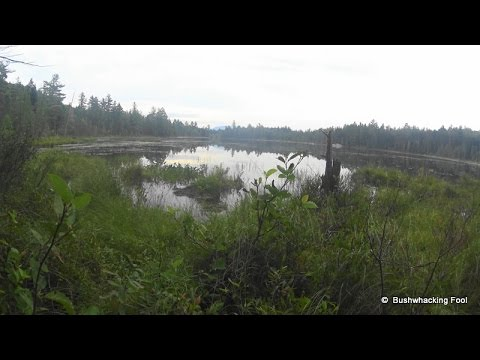Bushwhacking from Squirrel Pond to Cranberry Pond in the Hudson Gorge Wilderness