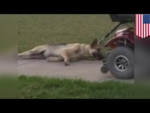 Thumbnail: Animal cruelty: Dog dragged behind motorized scooter by man in Texas caught on camera - TomoNews