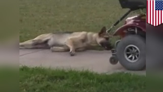 Animal cruelty: Dog dragged behind motorized scooter by man in Texas caught on camera - TomoNews