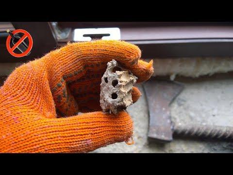 Шершень в доме, как избавиться от гнезда