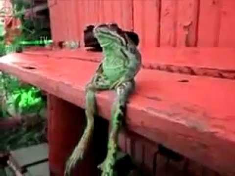 A Frog Sitting On A Dock Of The Bay Hq Music Youtube