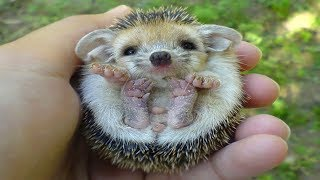 CUTEST Animal Babies!
