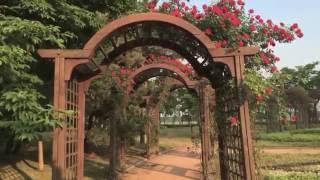 Цветы в нашем городе Осон Южная Корея