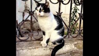 Коты и кошки    Воронеж  пешеходная экскурсия  09 11 2014