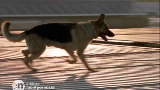 """Rex, chien flic - Extrait de la saison 8 """"Le Chantier abandonné"""""""