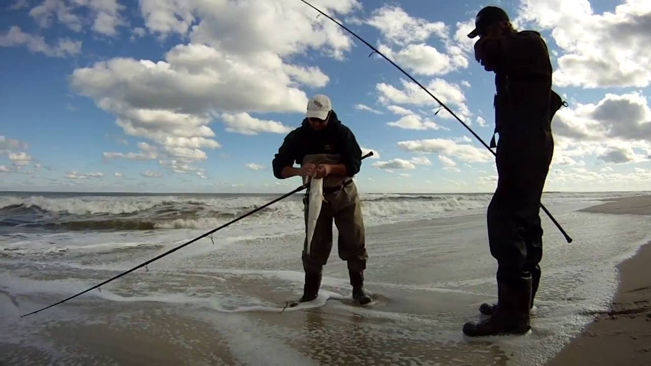 Fishing: Epic Surf Fishing Day Island Beach State Park New ...