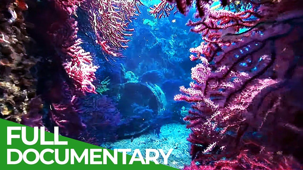 Adventure Ocean Quest: Fragile Mediterranean | Free Documentary Nature