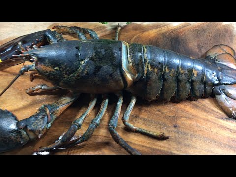 Whole lobster cutting and cleaning process | How to cut a big lobster in bangla