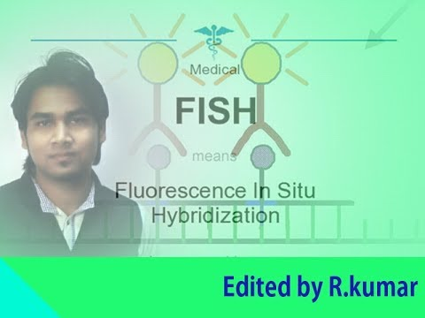 Fluorescent In Situ Hybridization (FISH)