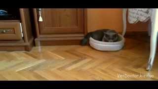 Нежная кастрация. Как кот приходит в себя через 30 минут после наркоза