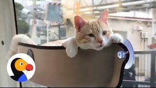 「猫の特等席」を車の窓に設置してみたら…こんなにリラックスした(動画)
